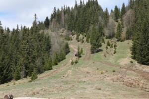 карпатский кордон