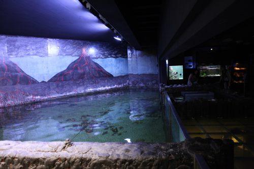 Аквариум в зоопарке