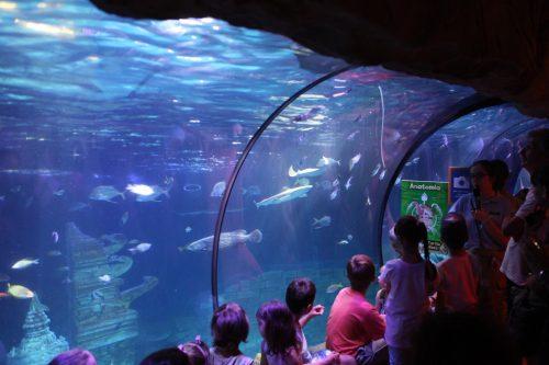 Шоу кормления акул