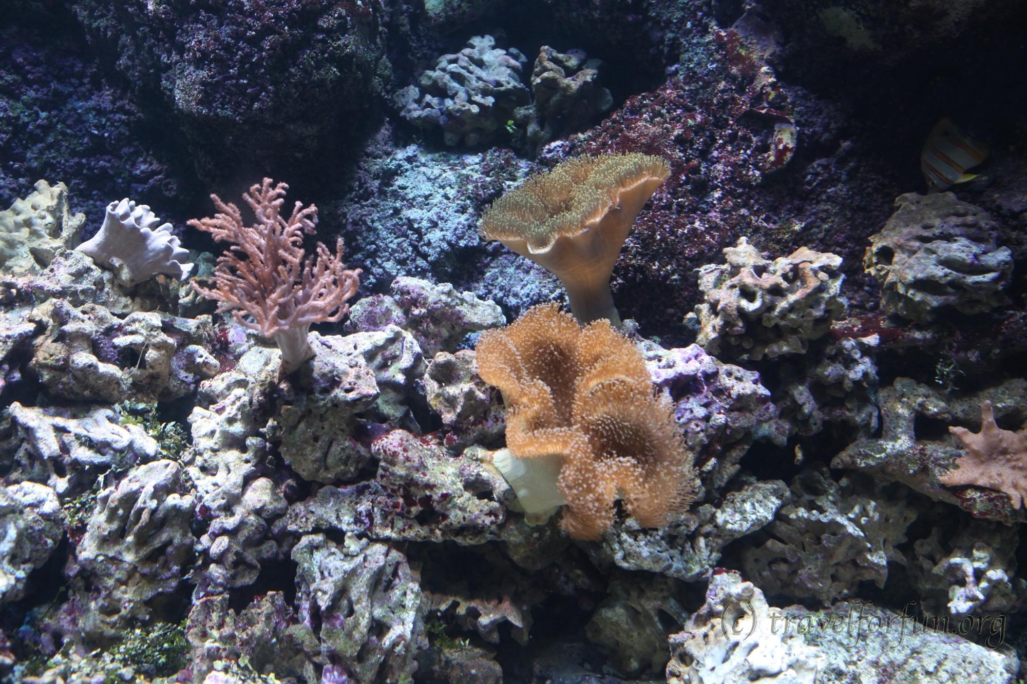 Аквариум Sea Life в Лидо ди Езоло