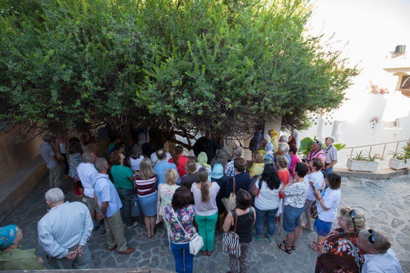 Чудотворное миртовое дерево Крит