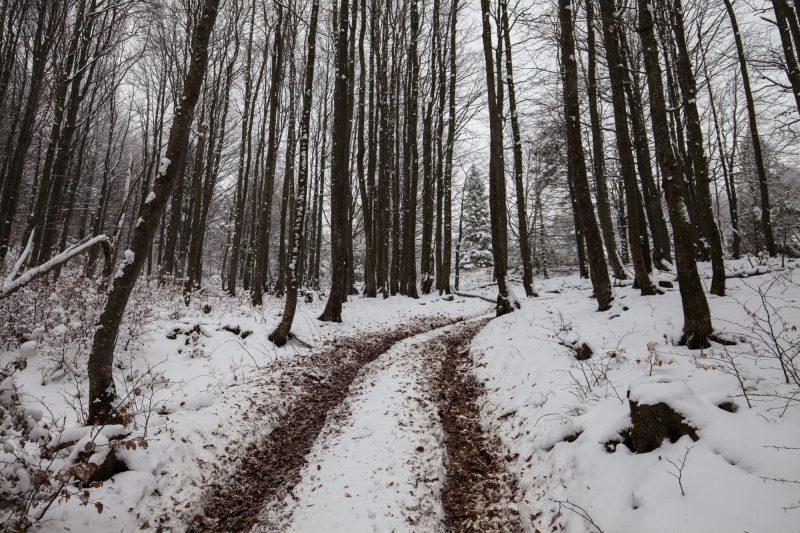 Лесная дорога в Карпатах