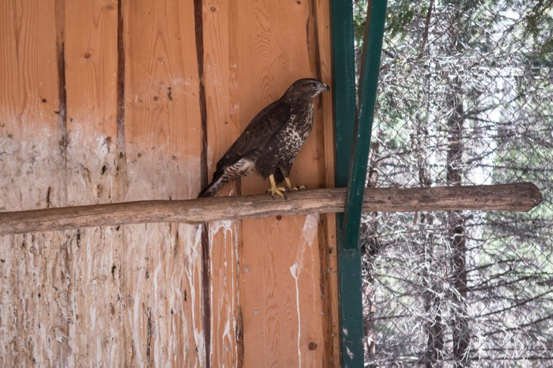 Мини зоопарк и вольерное хозяйство в Яремче