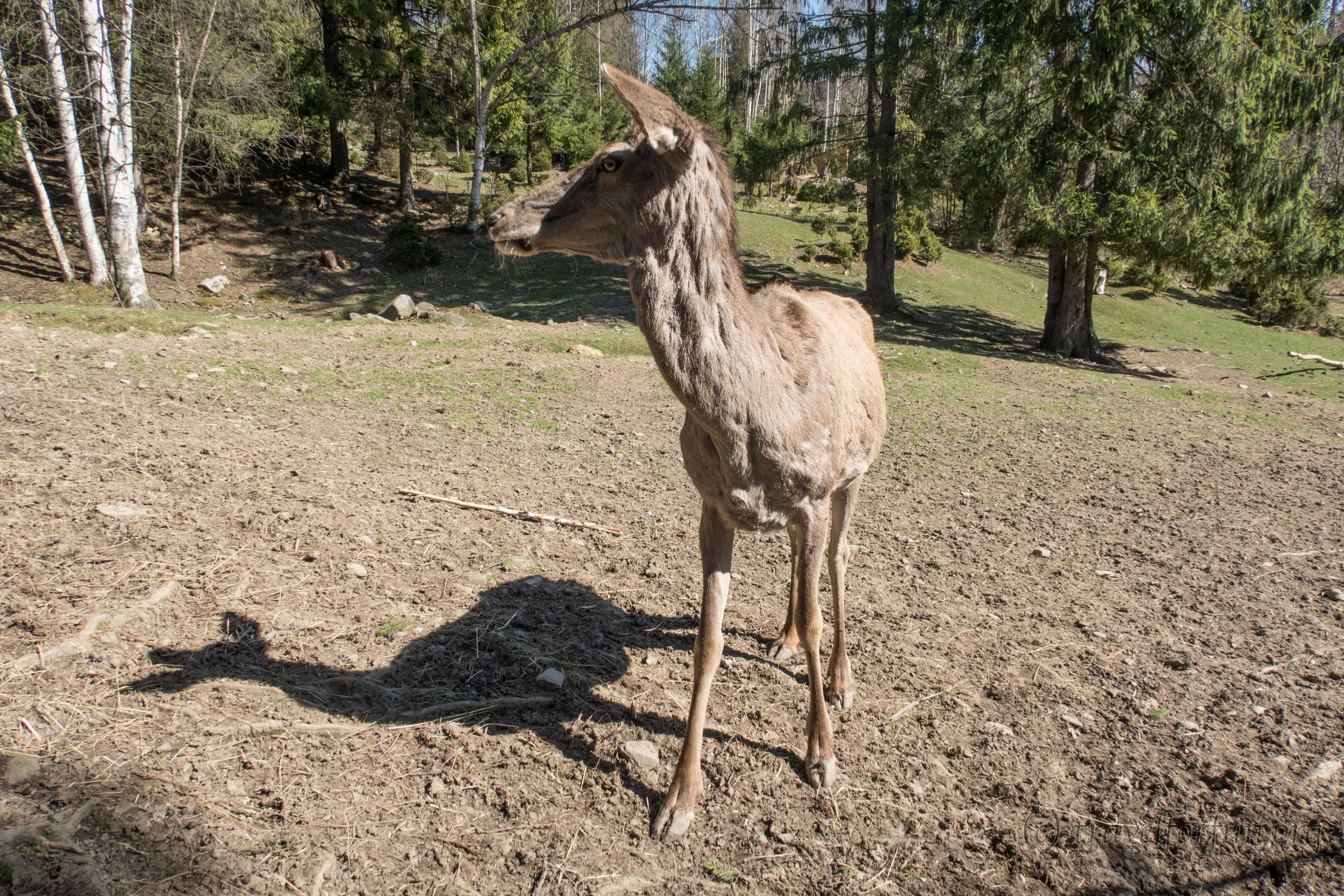 Міні зоопарк і вольєрне господарство в Яремче