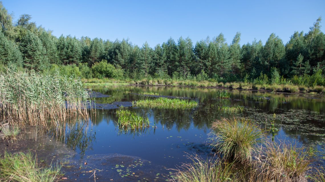 Национальный природный парк «Слобожанский» в Харьковской области